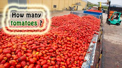 truck-tomatoes-tomatina.png